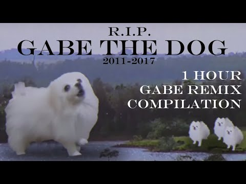 Rest in Peace - Gabe the Dog - One Hour of Gabe the Dog Memes
