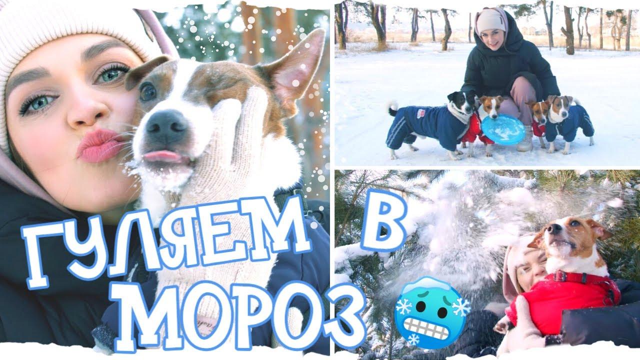 ❄ЗИМНИЙ DOG VLOG: Выехали с собаками на прогулку в лес - мороз, снег и настоящая зимняя атмосфера❄