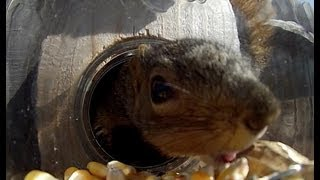 Squirrel Under Glass - Feeders By Refined Pallet