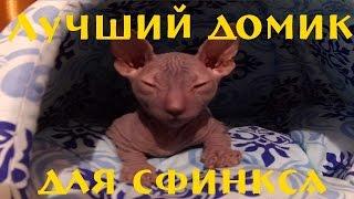 Обалденный домик для кота  сфинкса  Жорика!