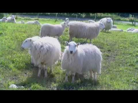 Livestock Education and Dogs (L.E.A.D.) - Keeping Dogs under control