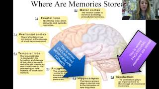 Memory biological basis of storage