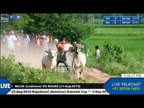 SHIFT 2 🔴 BILGA (Ludhiana) 🔴 OX RACES - ਬਲਦਾਂ ਦੀਆਂ ਦੌੜਾਂ [11th-Aug-2019]