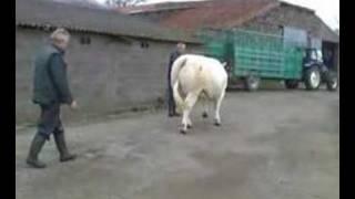 vers le salon de l'agriculture