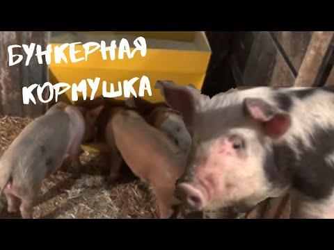Бункерные кормушки для свиней своими руками чертежи
