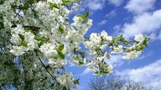 Народні прикмети, прогноз погоди на 25 квітня