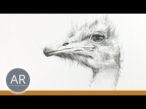 Tierillustration. Grundlagen. Tiere Einfach Zeichnen. Mappenvorbereitungskurs Kunst