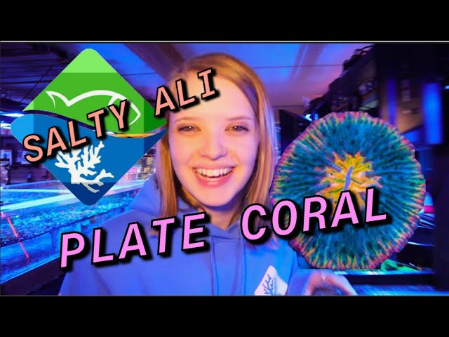 PLATE CORALS IN YOUR REEF!! Two(7) Minute Tuesday! With SALTY ALI and the Bandsaw Bandit