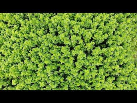 prAna – Why Hemp Matters | Kind of a Wonder Crop