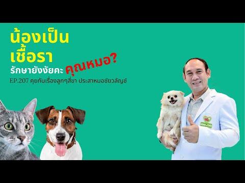 EP.207 น้องหมาเป็นเชื้อรา รักษายังงัยคะ คุณหมอ? : คุยกันเรื่องลูกๆสี่ขา ประสาหมอชัยวลัญช์