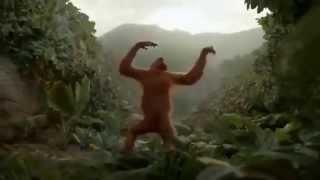 Смешное видео  Обезьяна танцует  Прикол