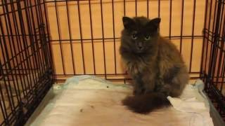 Бездомные животные: кошечка Изабель (история спасения кошек)