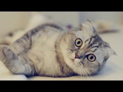 Những Hình Nền Mèo Cực Cute