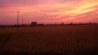 Paddy field during sunset