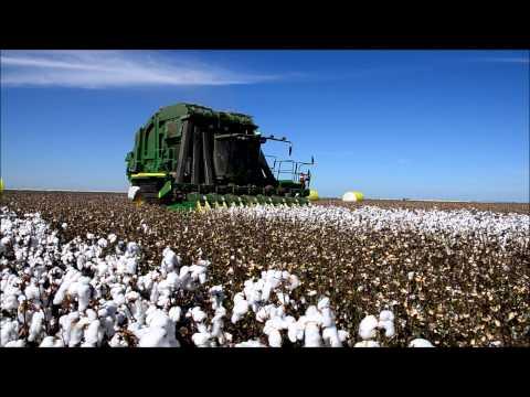 Cotton Harvest, Wee Waa Australia, 2013