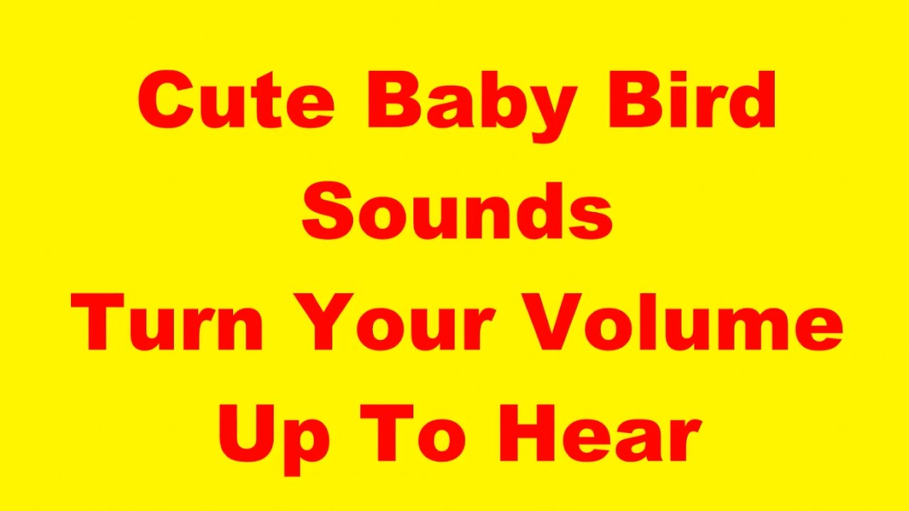 Baby Bird Sounds - YouTube