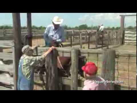 Bayou Cowboys of Louisiana Preview