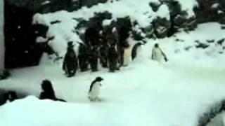 MP3/hardcore penguin