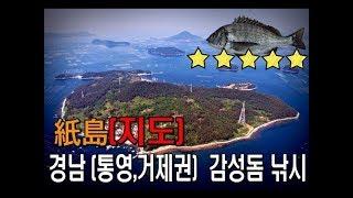 남해 바다낚시 (통영, 거제권) 지도섬 감성돔 낚시