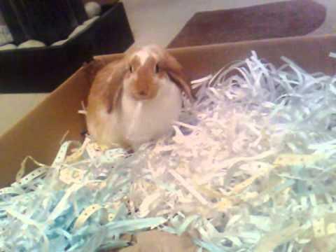 Cardboard box + shredded paper = happy rabbit