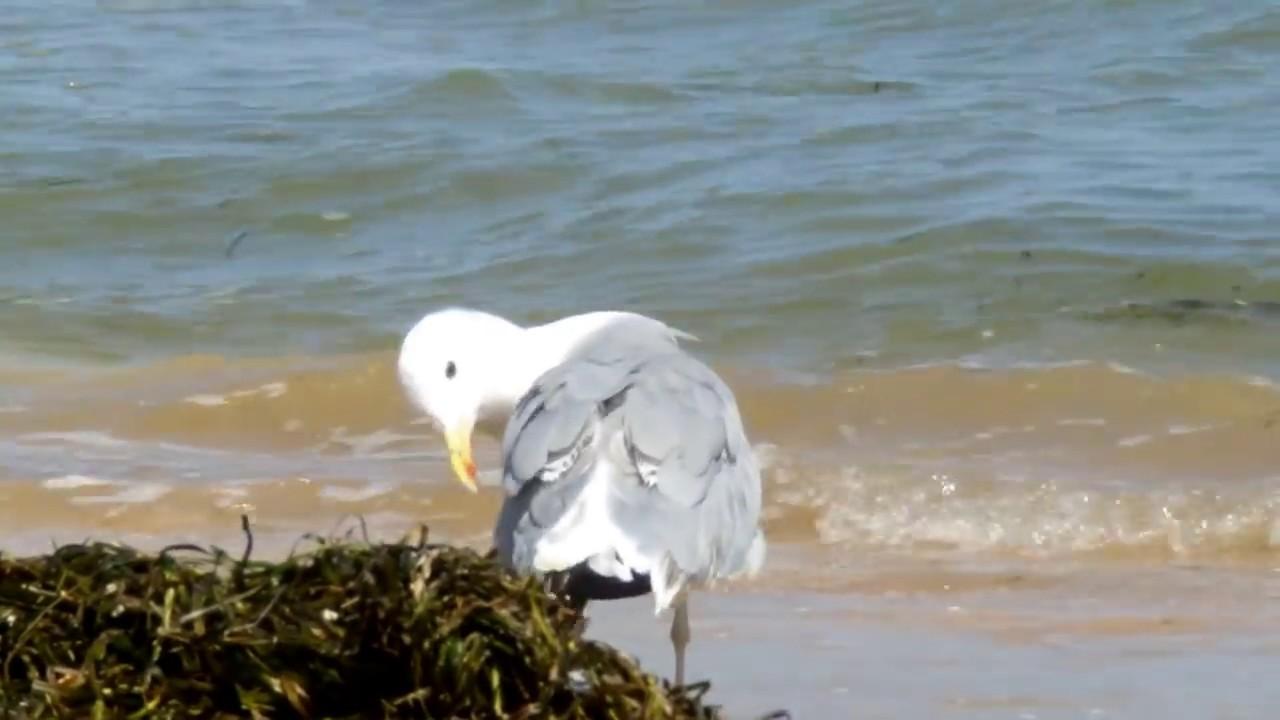 Пляж Генгорки 2016. Арабатская стрелка.Отдых на Азовском море.
