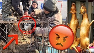 I saved a Siberian Husky from a dog meat market in China