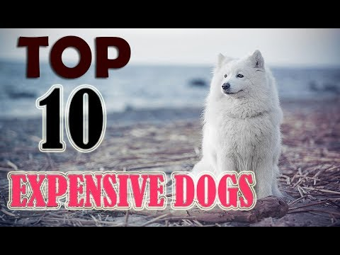 Top 10 Most Expensive Dog Breeds 2018