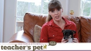 Discipline For Your Dog | Teacher's Pet With Victoria Stilwell