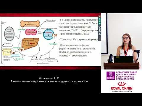 Каковы причины анемии и как остановить болезнь?