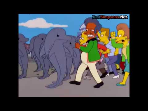 Springfield vs The Dolphins