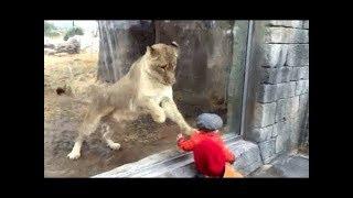 ЖИВОТНЫЕ - пытающиеся через стекло напасть на детей. зоо 2018
