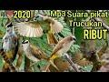 Suara Pikat Burung Trucukan Ribut   Mp3 - Mp4 Download