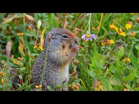 Glacier National Park - Part 2: Native and Invasive Species