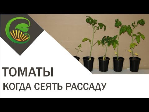 Вопрос: Можно сеять помидоры на рассаду в апреле Не поздно?