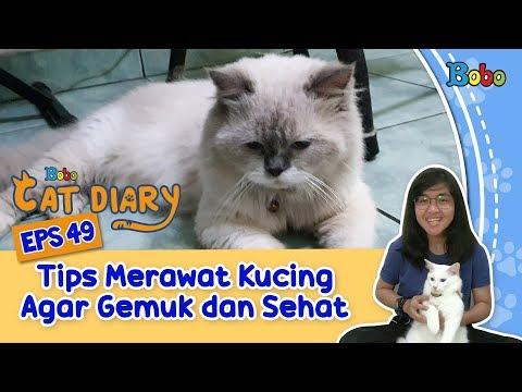 diary-kucing-eps-49---tips-merawat-kucing-agar-gemuk-dan-sehat