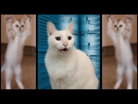 Cats Sing Classical Music - Can Can - Cats Version - Cats Parody