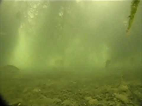 Fish Swim In Christmas Tree Reef