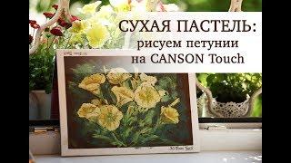 СУХАЯ ПАСТЕЛЬ: рисуем петунии на CANSON Touch