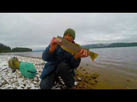 Fat Winter Rainbows At Lake Almanor (Lassen National Forest)