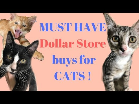 Cheap But Awesome Dollar Store Items For Kitten & Cat Fosters!