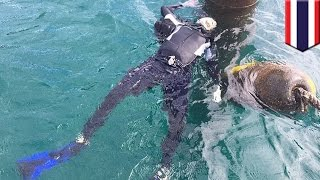 Diver found dead with throat slit and body tied to concrete pole off Thailand beach - TomoNews
