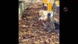 наша Собака- Подруга всех кошек во дворе. dog and cats.-2