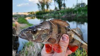 Рыбалка удалась Попал на выход рыбы Рыба бьет с нереальной силой Голавль и окунь сошли с ума