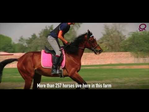 Exploring Qatar: Al Samariyah farm