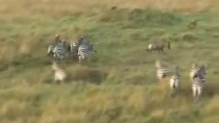 ケニアのマサイマラ国立保護区でバルーンサファリを体験したときの動画...