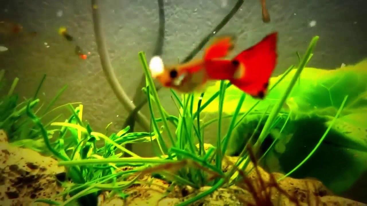 1 Million Fish Hd Fish Tank Talk Hd Top Best Fish Collection