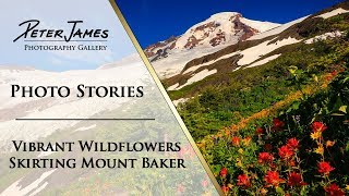 """""""Vibrant Wildflowers Skirting Mount Baker"""" - Landscape Photography Stories"""