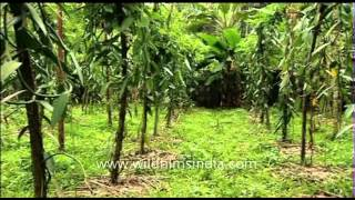 Vanilla orchids: this is where your vanilla comes from!