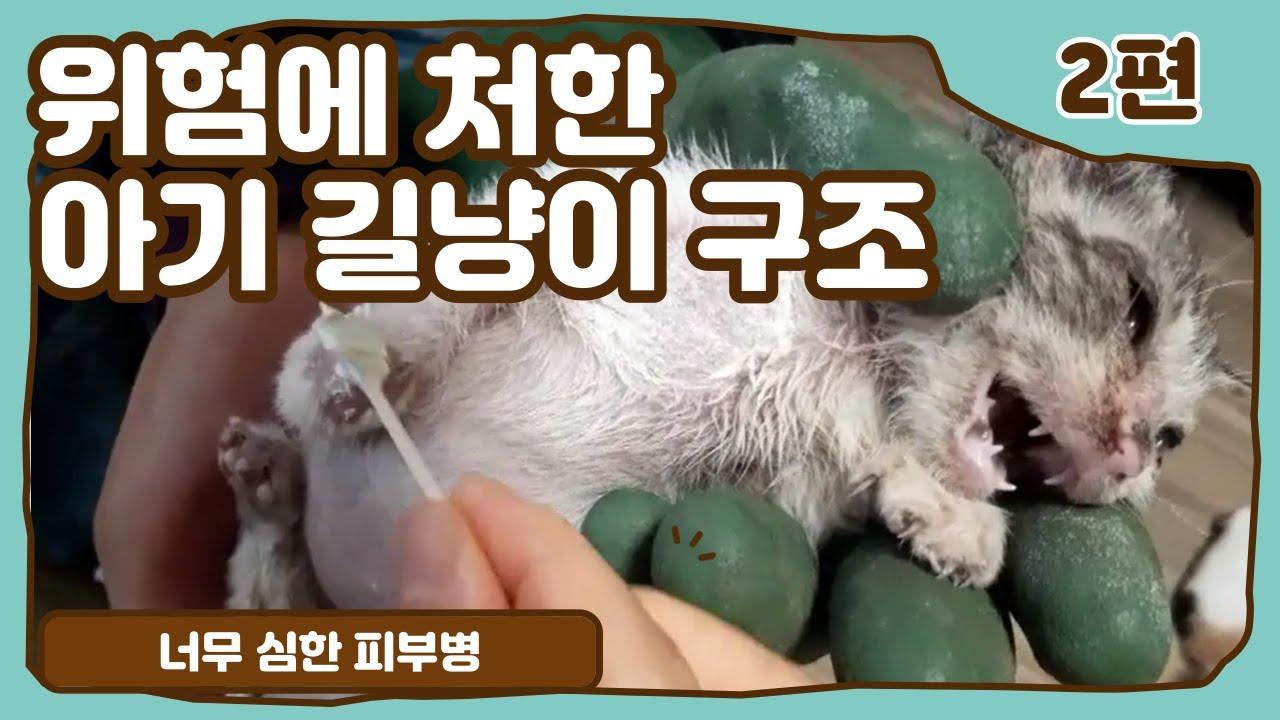 2편) 새끼 길고양이 구조 아기야 약바르자
