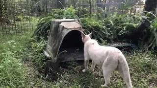 Q&A at Big Cat Rescue to see big cats 09 18 2019